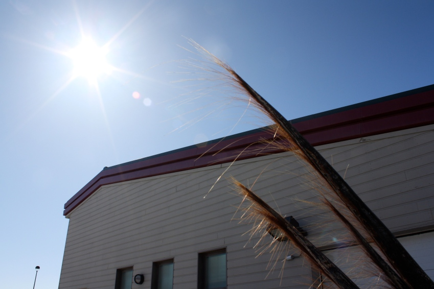 Whale baleen in the sun.